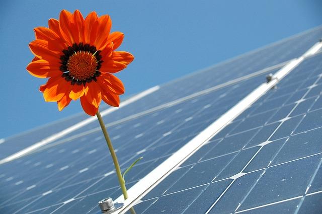 Panneau solaire avec une fleur qui pousse dessus